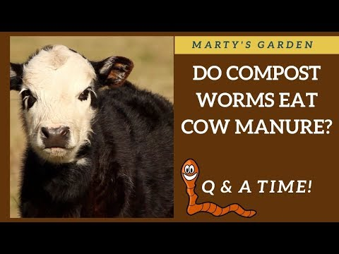 Can I Feed My Compost Worms Cow Manure?