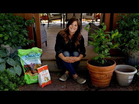 Growing Citrus Trees in Containers! 🍋🌿// Garden Answer