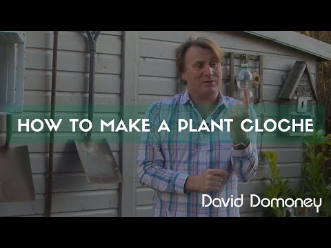 Gardening Tip: How to make a homemade plant cloche