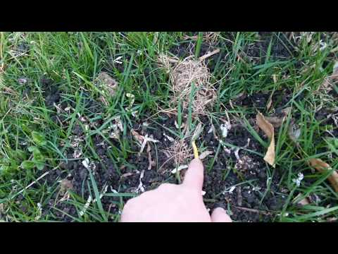 How well do worm castings work in a yard?