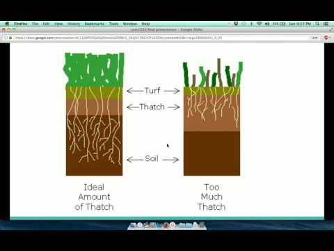 Verticutting & Thatch Removal - Brief Presentation