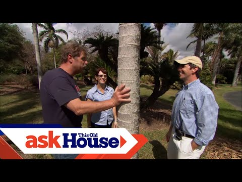 How to Plant Palm Trees | Ask This Old House