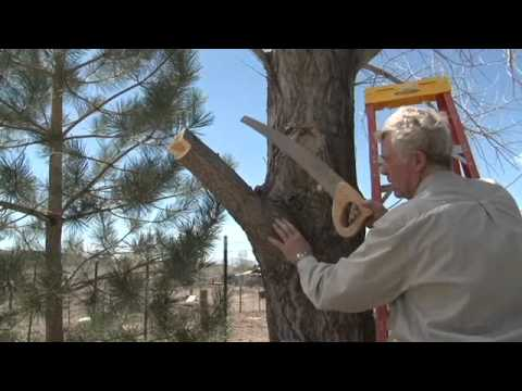 How to Remove Large Tree Limbs