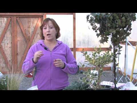 Gardening Tips : How to Prune Oleander