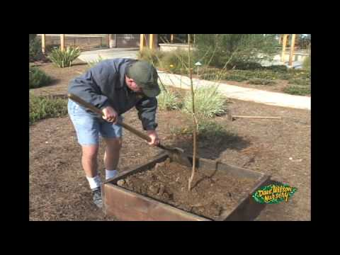 Elevate Your Fruit Tree Planting