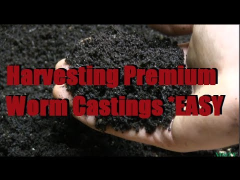 How To Harvest The BEST Worm Castings Fast & Easy