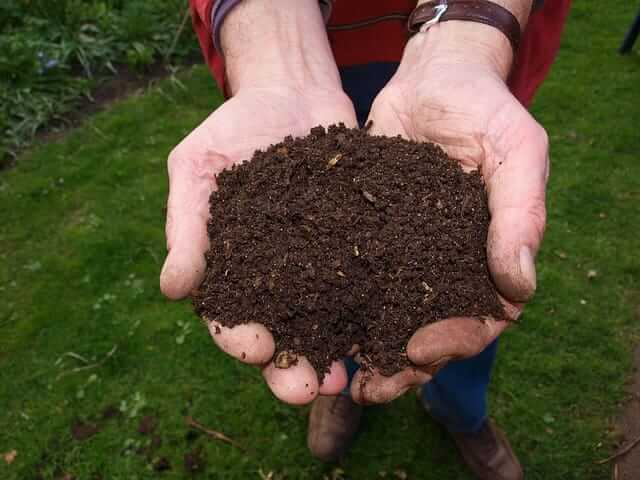 compost is an incredible soil amendment for flower beds.