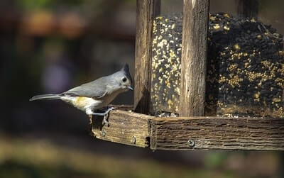Properly maintain your bird feeder to prevent disease and rats.