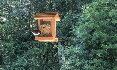 Bird feeders attract rodents. Those rodents are food sources for snakes.