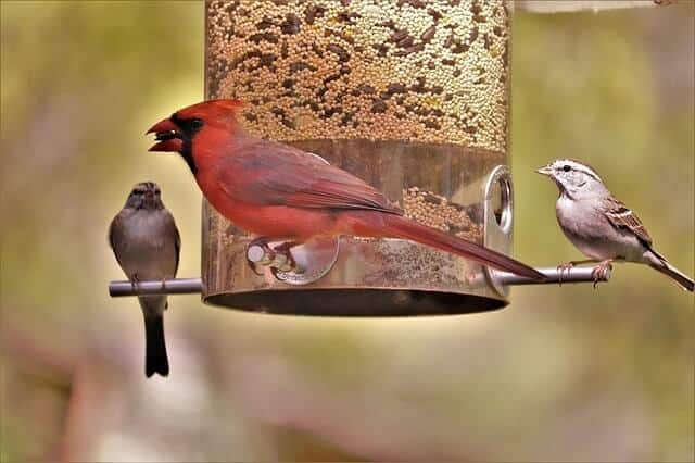 Do Bird Feeders Attract Rodents And Snakes?