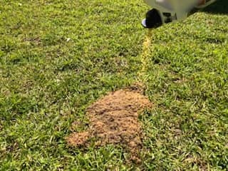 Fire ant poison helps to control this aggressive species.