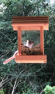 Don't feed birds in the summer and clean your feeder regularly to reduce rodents and snakes.