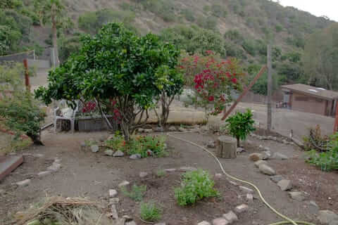Creating a garden in the desert presents many challenges.