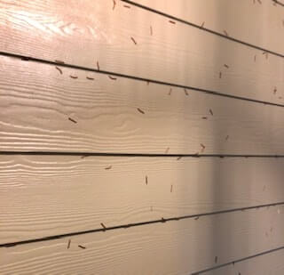 Ants are part of your yards natural pest control.
