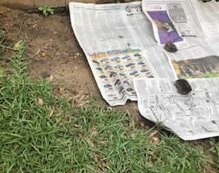 Using newspaper as a weed barrier is a better use than as mulch.
