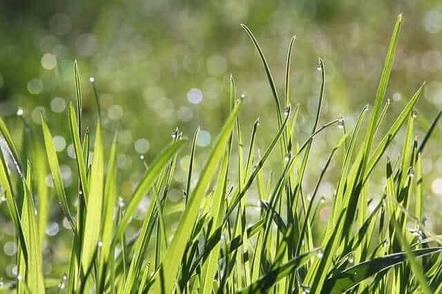 Growing grass in clay soil.