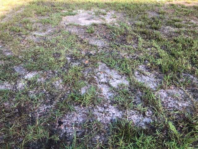 Amend Clay Soil Without Digging – 5 Steps To Lasting Results