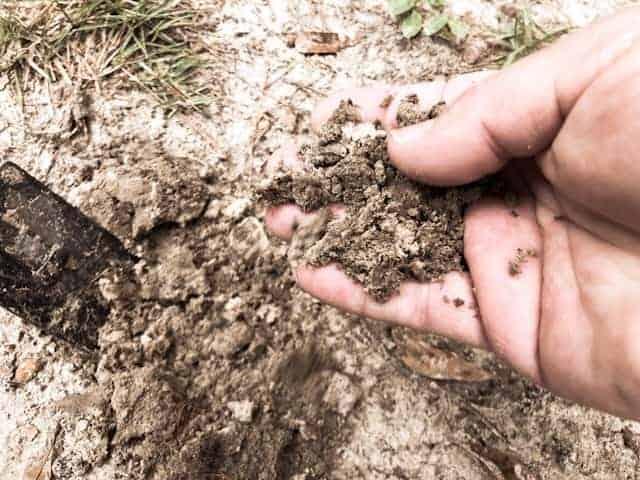 Alkaline Soil