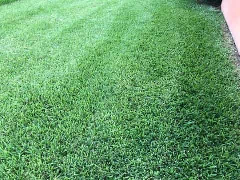 Deep-rooting grasses are less prone to drought and are able to feed from deep nutrients in the soil.