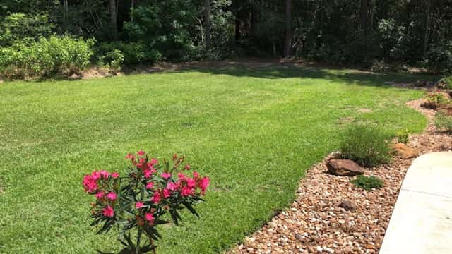 Centipede Grass Fertilizer: What to Use and When