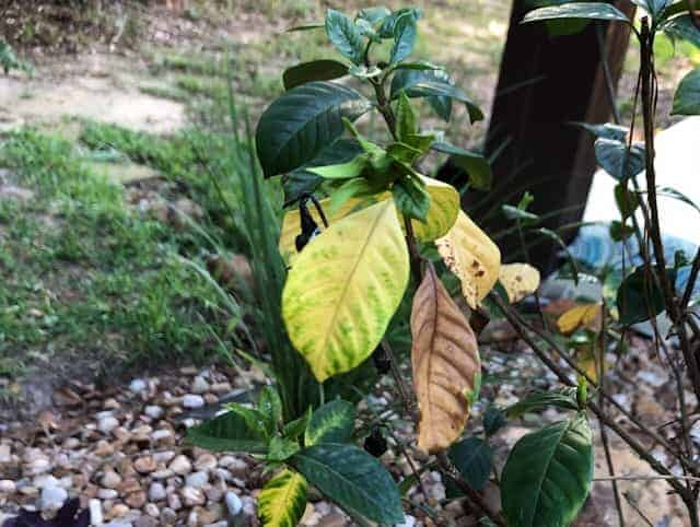 What Are The Signs Of Overwatering Plants?