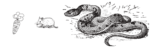 Snakes hunt rats that feed off the kitchen scraps in compost piles.