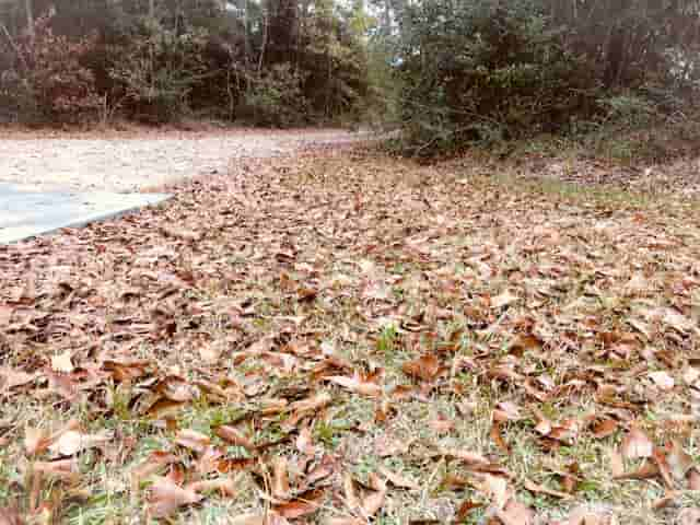 How to mulch leaves without a lawn mower.