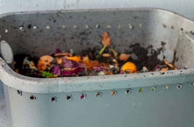 Why Worm Bins Need Air Holes (It's More Than Just Oxygen)