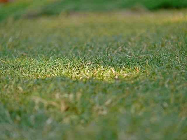 Will St. Augustine Take Over Bermuda grass?