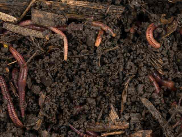 Best Worm Bins For Composting