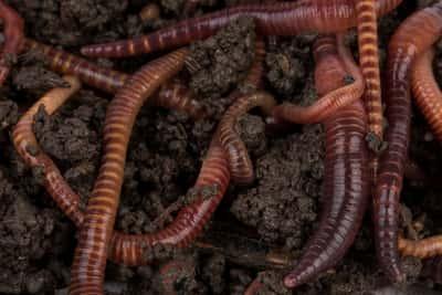Worm Farming Articles