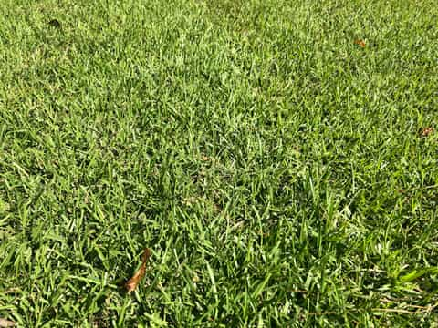 Results of proper lawn aeration on grass growth.