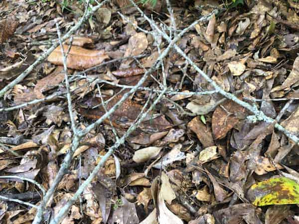Dead leaves and twigs are excellent carbon sources for a compost pile.