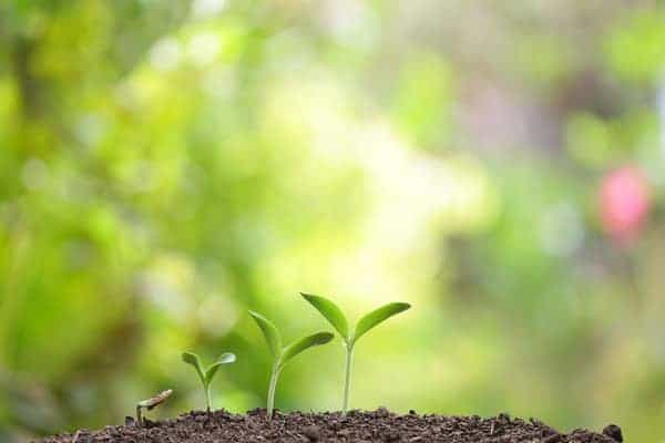 Topsoil vs compost for starting a new garden.