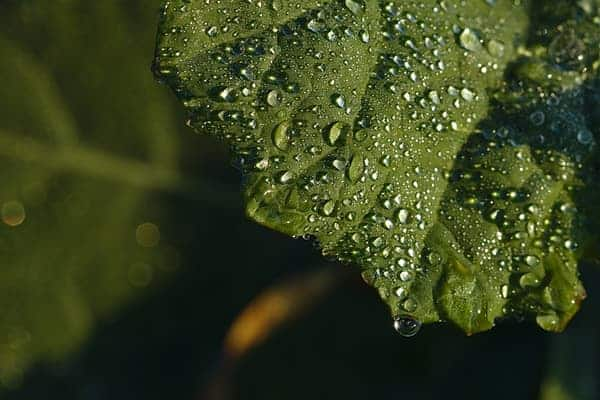 Providing sufficient moisture for indoor gardens is critical to ensure vigorous growth.