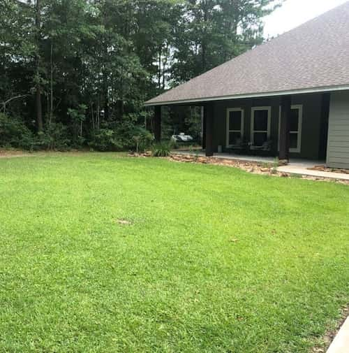 Clay soil lawn fertilized but no pre-emergent applied.