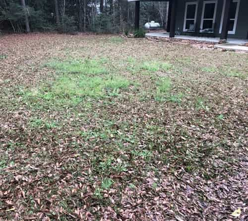 This is what my lawn was looking like in February before the grass began actively growing. No pre-emergent applied.