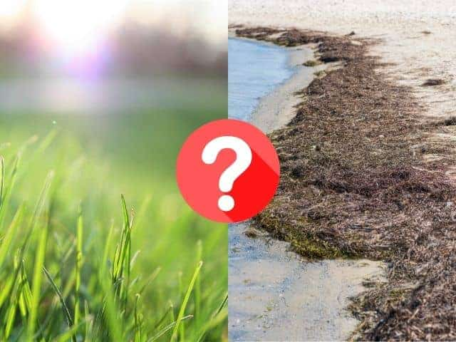 Seaweed For Lawns: Surprising Benefits Backed By Science