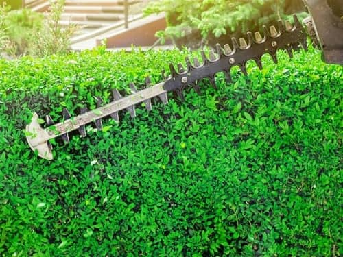 Choose a hedge trimmer that suits your specific needs. Both ECHO and Stihl offer quality choices.