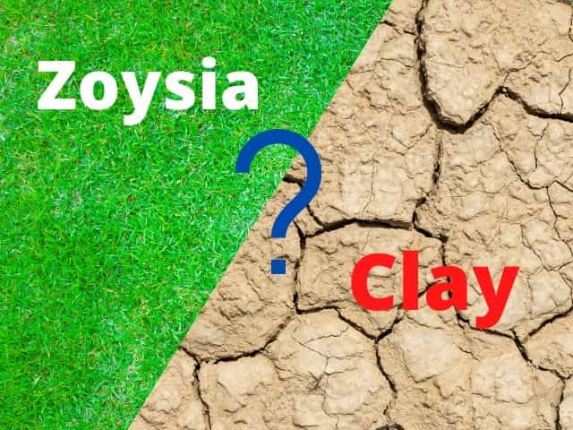 Will Zoysia Grow In Clay Soil? Here Are The Facts