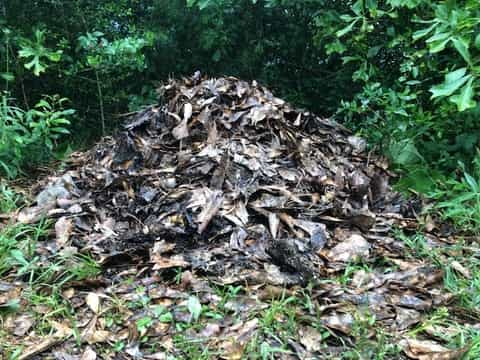 Leaves piled up for passive composting