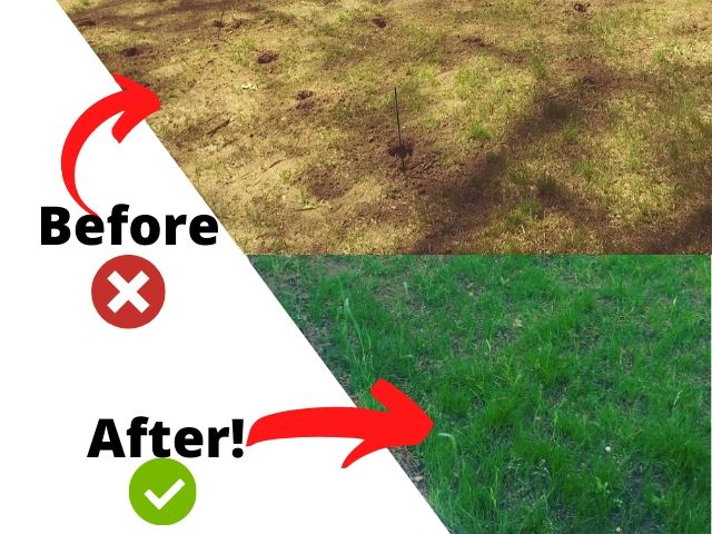 Growing Tall Fescue In Difficult Soil: Renee's Success Story