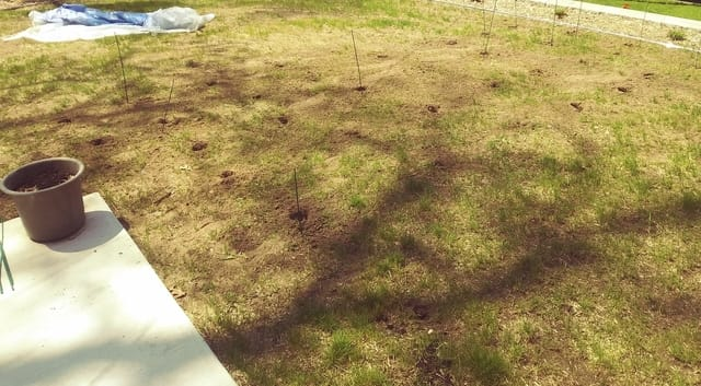 To help the tall fescue's root growth, holes are drilled in the difficult soil throughout the yard.