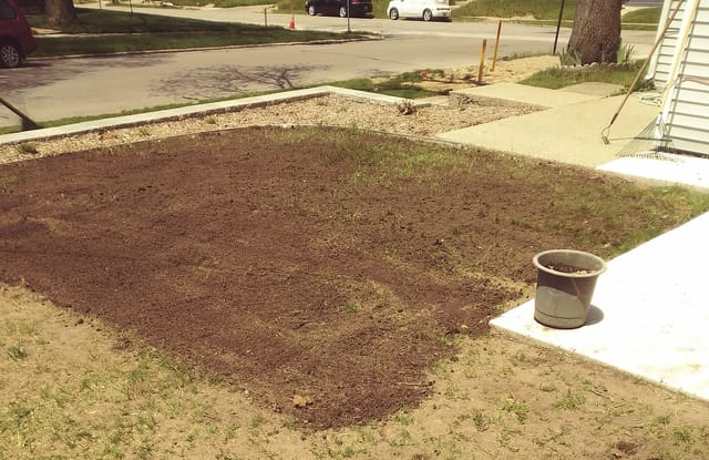 Topdressing is applied to give grass seeds a growth medium.