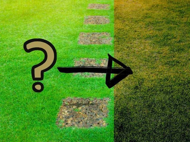 Why Is My Zoysia Lawn Turning Brown? 4 Key Causes Explained