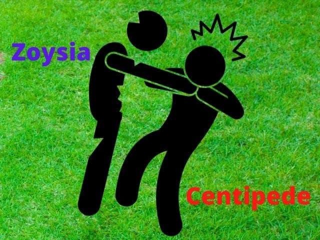 Will Zoysia Choke Out Centipede Grass?