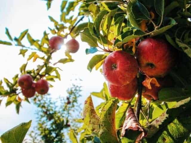How to create a backyard food forest.