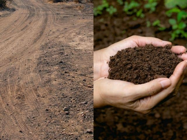 Difference between dirt and soil.