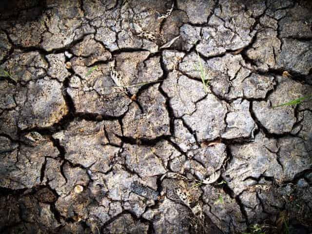 Does Soil Go Bad?