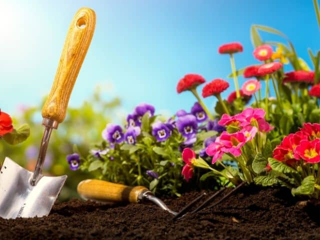 How to start a flower garden.